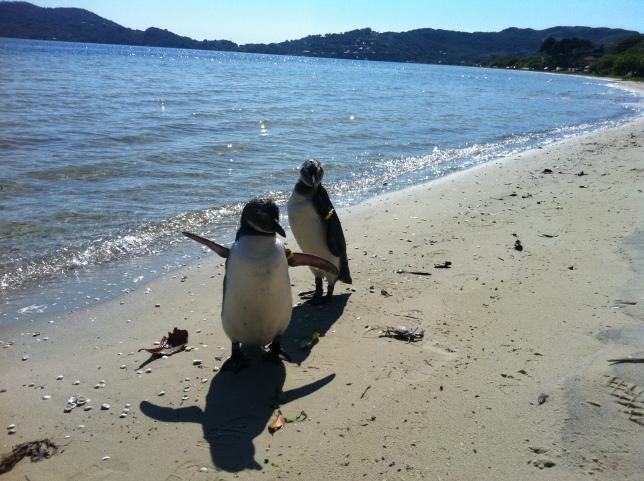 2 - Cristina Keller Sartori (Pinguins) – 10 votos